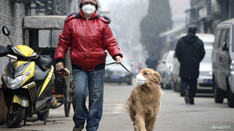 """A man and his dog, both wearing masks, walk along a small alley on a hazy day in Beijing, February 23, 2014. China's capital Beijing, under fire to take effective measures against air pollution, raised its four-tiered alert system to """"orange"""" for the"""