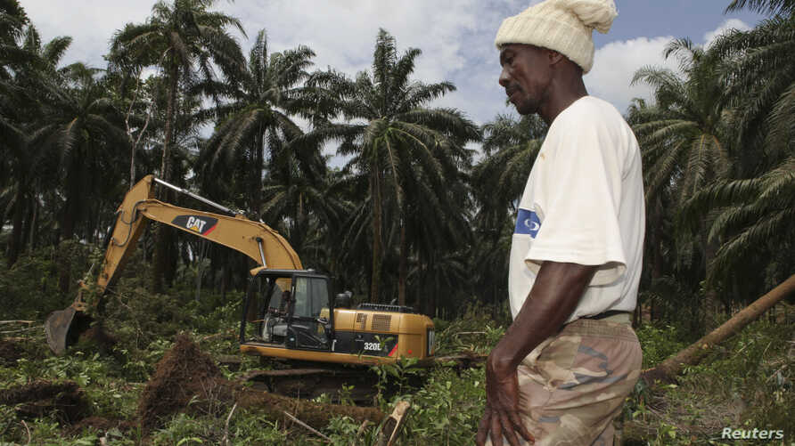 FILE - A workman stands in front of an excavator that is clearing land for a palm oil plantation in Malen chiefdom in the Pujehun district in southern Sierra Leone, Oct. 28, 2011. The Sierra Leone plantation of Lichtenstein-based Socfin is one of man