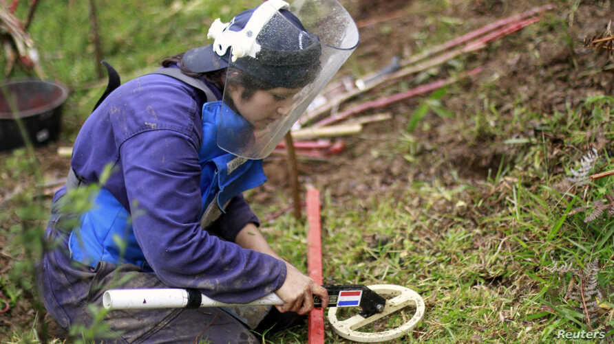A woman from the countryside practises searching for landmines during a training session involving mock landmines in El Retiro, Antioquia January 23, 2013. A law allowing civil organizations to carry out mine clearance in Colombia was approved in Dec