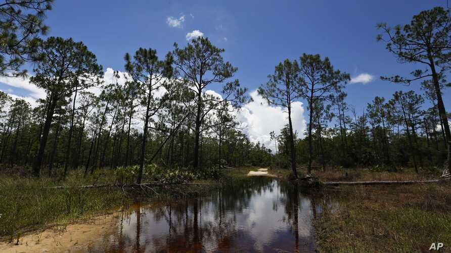 FILE - A puddle blocks a path that leads into the Panther Island Mitigation Bank near Naples, Fla., June 7, 2018. Experts say the Trump administration's move to redefine what constitutes a waterway under federal law is threatening a uniquely American