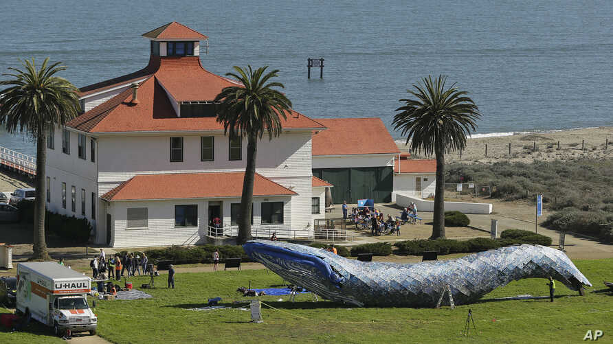 Artist Joel Deal Stockdill, lower right, works on a blue whale art piece made from discarded single-use plastic at Crissy Field in San Francisco, Oct. 12, 2018.