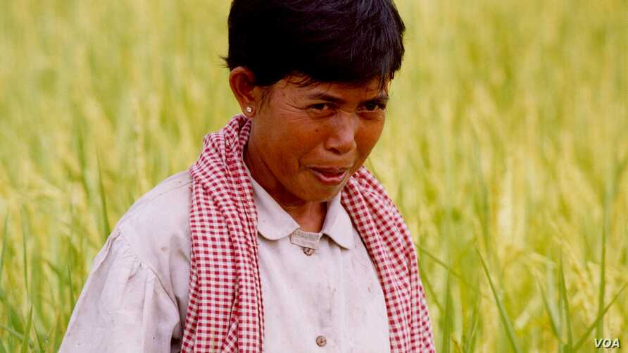 Ms. Taing Kim is at the rice field during DC-Cam filming her story in 2005. (Courtesy photo of DC-Cam)