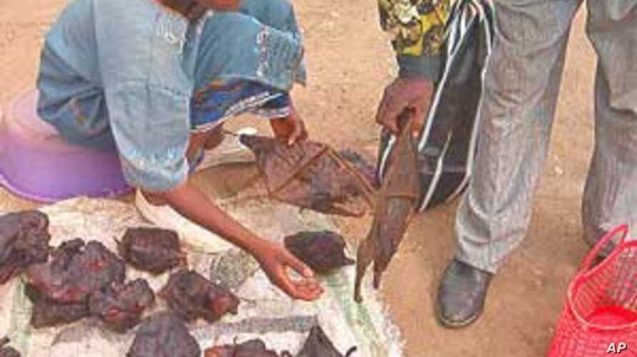 Vendor sells bats and other bush meat in market outside Yaounde, Cameroon