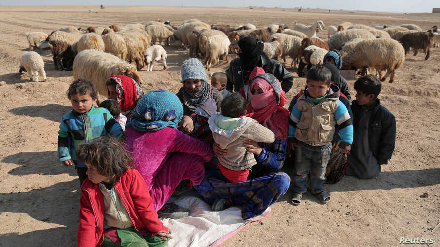 Internally displaced Syrians who fled Raqqa city rest near sheep in northern Raqqa province, Syria, Feb. 6, 2017.