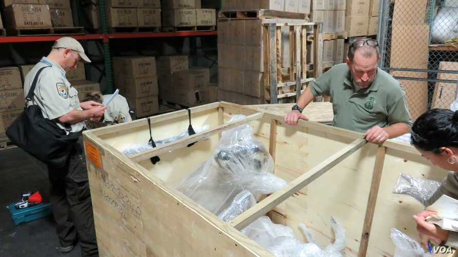 U.S. Fish and Wildlife Service Special Agent In Charge Eric Marek (center right) and Supervisory Wildlife Inspector John Goldman (left) examine a shipment of African hunting trophies at a customs bonded warehouse near Seattle-Tacoma International Air
