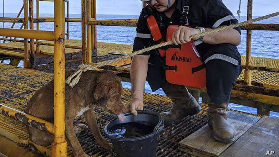 A dog is taken care by an oil rig crew member after being rescued in the Gulf of Thailand, April 12, 2019.
