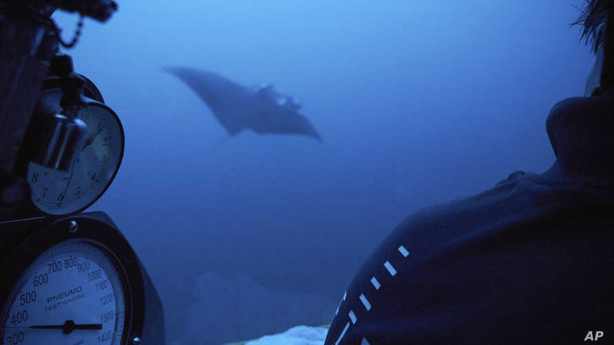 A manta ray swims near the submersible during a dive off the coast of the island of St. Joseph in the Seychelles, April 8, 2019.