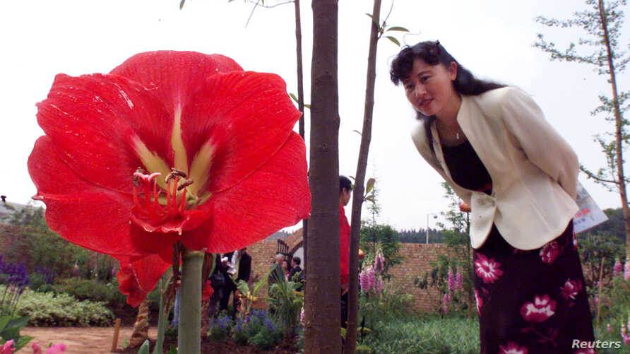 FILE - A Chinese woman looks at a Hippeastrom flower in an English Garden at China's International Horticulture Exhibition in Kunming, capital of southwest Yunnan province.