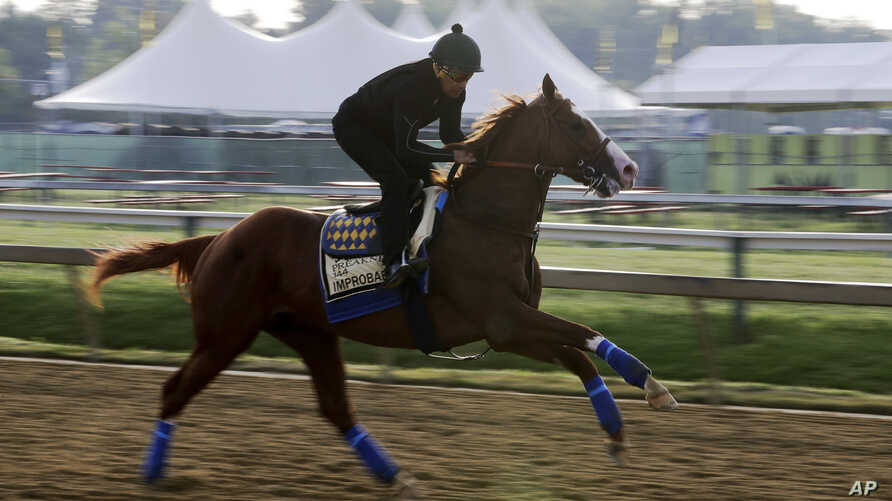 Improbable, the 5-2 favorite, prepares for Saturday's Preakness horse race at Pimlico race track in Baltimore, May 17, 2019.