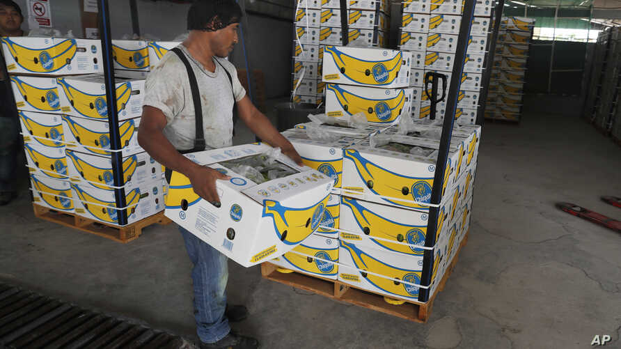 A worker stacks a box of freshly harvested Chiquita bananas to be exported, at a farm in Ciudad Hidalgo, Chiapas state, Mexico, May 31, 2019. President Donald Trump plans to impose 5% tariffs on Mexican imports starting June 10 and to ratchet them up...