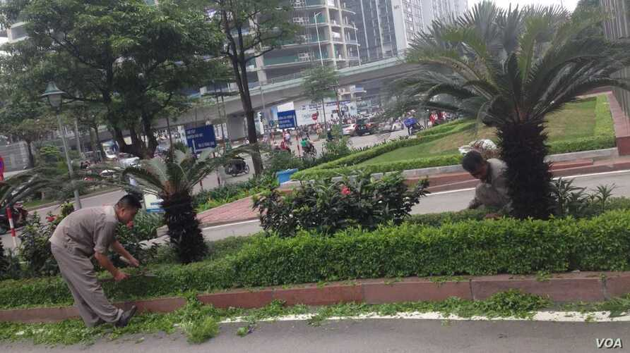 FILE - Maintenance workers tend to some bushes in Hanoi, where most people who want a job can find one.