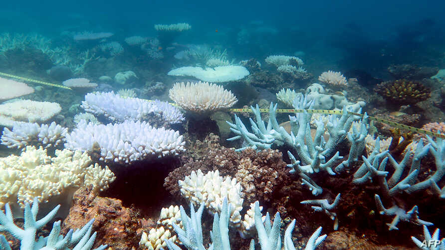 An undated handout photo received from ARC Centre of Excellence for Coral Reef Studies on April 19, 2018, shows a mass bleaching event of coral on Australia's Great Barrier Reef.