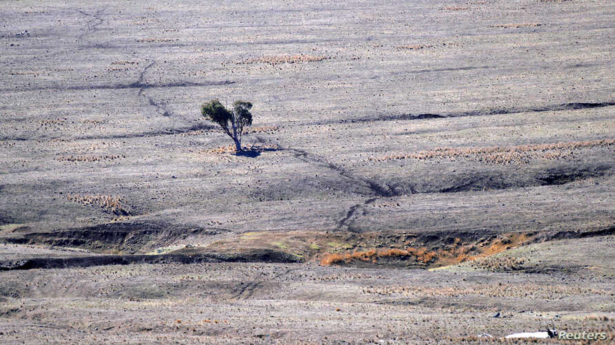 FILE - Tracks made by sheep can be seen in a drought-affected paddock on a farm in central New South Wales, Australia, Sept. 17, 2018.