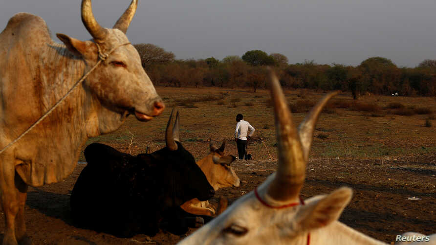 Cattle are commonly used for dowries in South Sudan, making daughters a potential source of wealth. In a ruling last month, a court in South Sudan annulled a child marriage, which activists hope sets a precedent for other girls in the country.