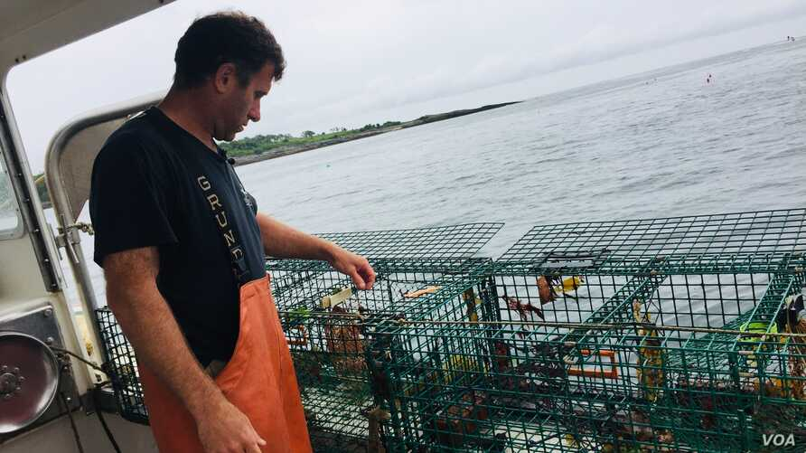 Lobsterman Tom Martin checks his traps off Casco Bay on the Southern coast of Maine. (J. Taboh/VOA News)
