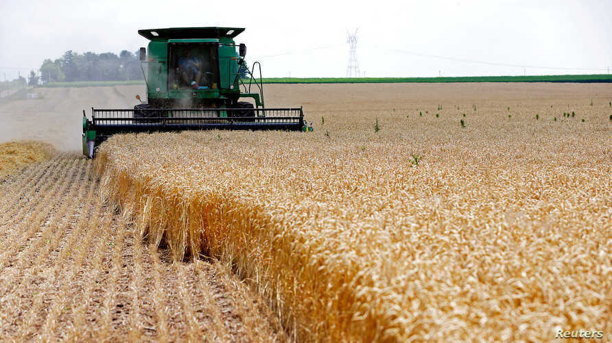 FILE - A combine drives over stalks of soft red winter wheat during the harvest on a farm in Dixon, Illinois, July 16, 2013.