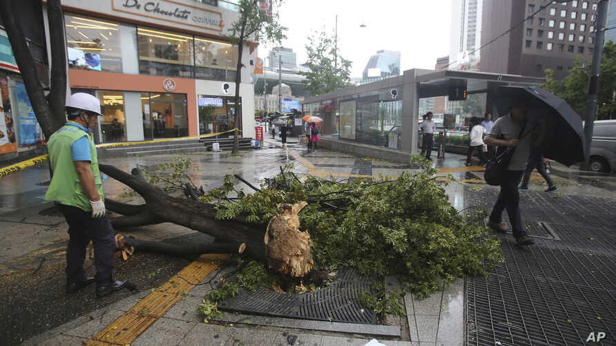 A fallen tree caused by Typhoon Lingling lies across a walkway in Seoul, South Korea, Sept. 7, 2019.