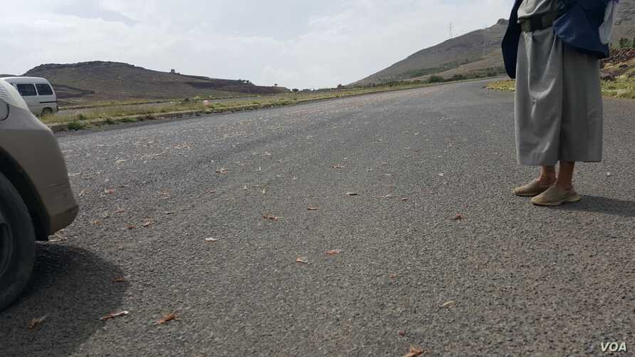 Dead locusts are seen on a Yemen highway (N. Shaker/VOA)