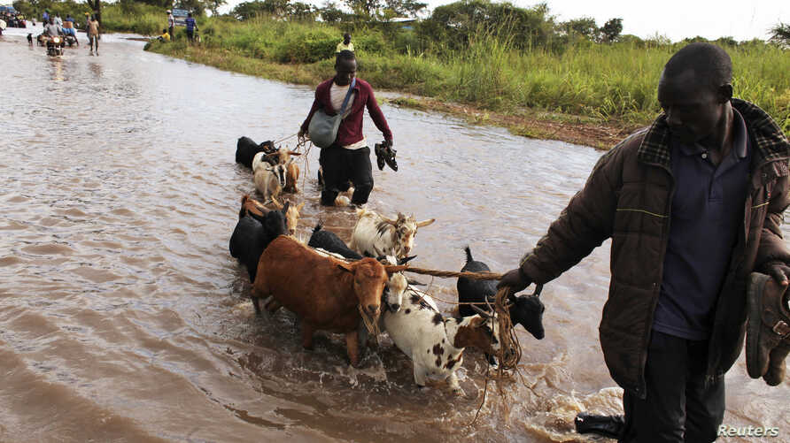 A man directs his herd of goats through a flooded section of the road from the Ugandan border into South Sudan at Nimule August…