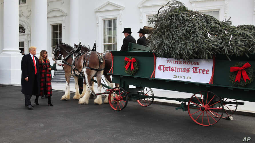 Official White House Christmas Tree to Arrive Monday   Voice of America - English