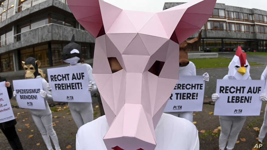 PETA activists protest for animal rights and pain-free piglet castration at the Federal Constitutional Court in Karlsruhe, Germany, Nov. 19, 2019.