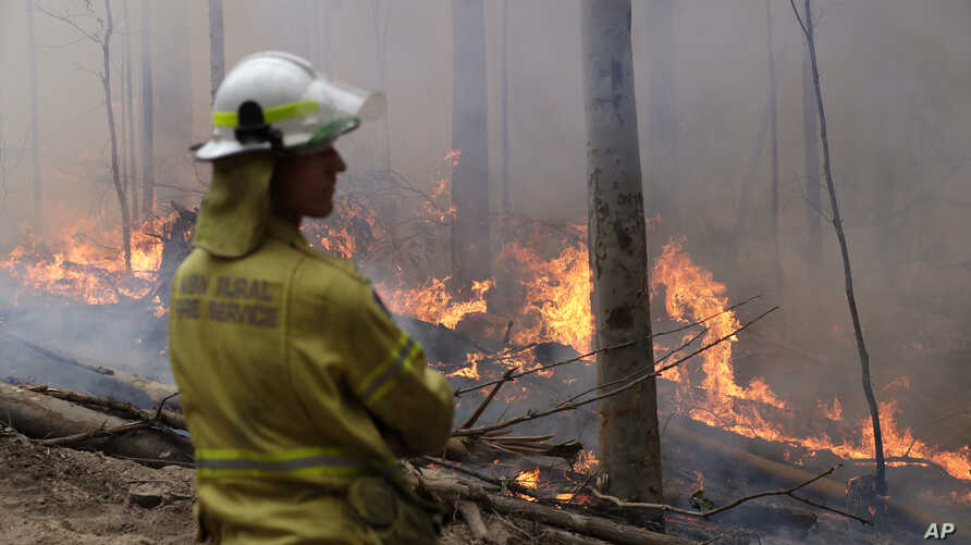 A firefighter keeps an eye on a controlled fire as they work at building a containment line at a wildfire near Bodalla.