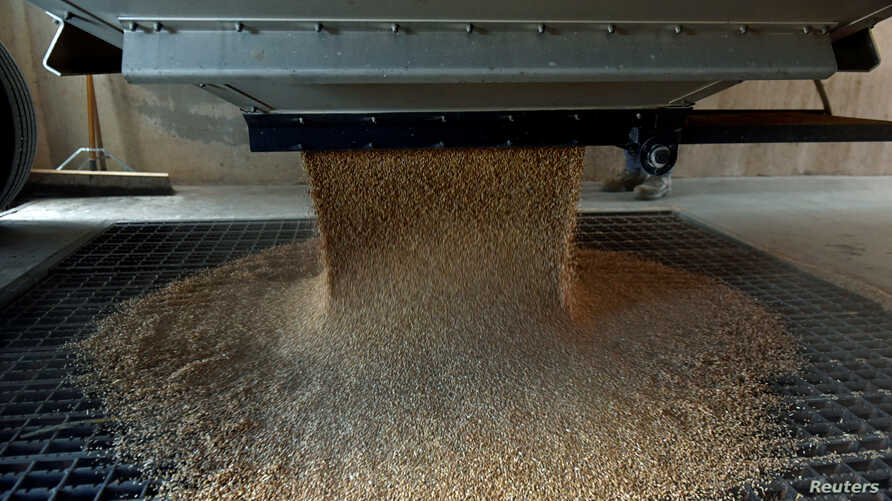 FILE PHOTO: A grain trailer empties wheat into the pit at the Farmers Cooperative Exchange in Bessie, Oklahoma, U.S., June 12,…