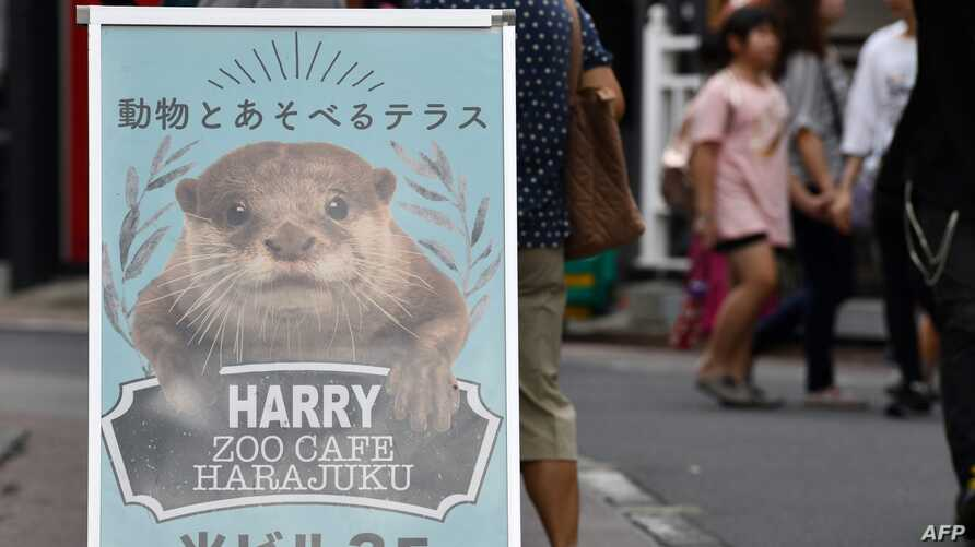 A promotional signboard for a pet cafe that features otters is displayed at the Harajuku district in Tokyo on August 21, 2019. Social media are fuelling a burgeoning appetite for acquiring wild otters and other endangered animals as pets,…