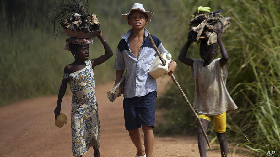 FILE - In this June 30, 2005 file photo, children living in a cocoa producing village walk back from the fields carrying wood…