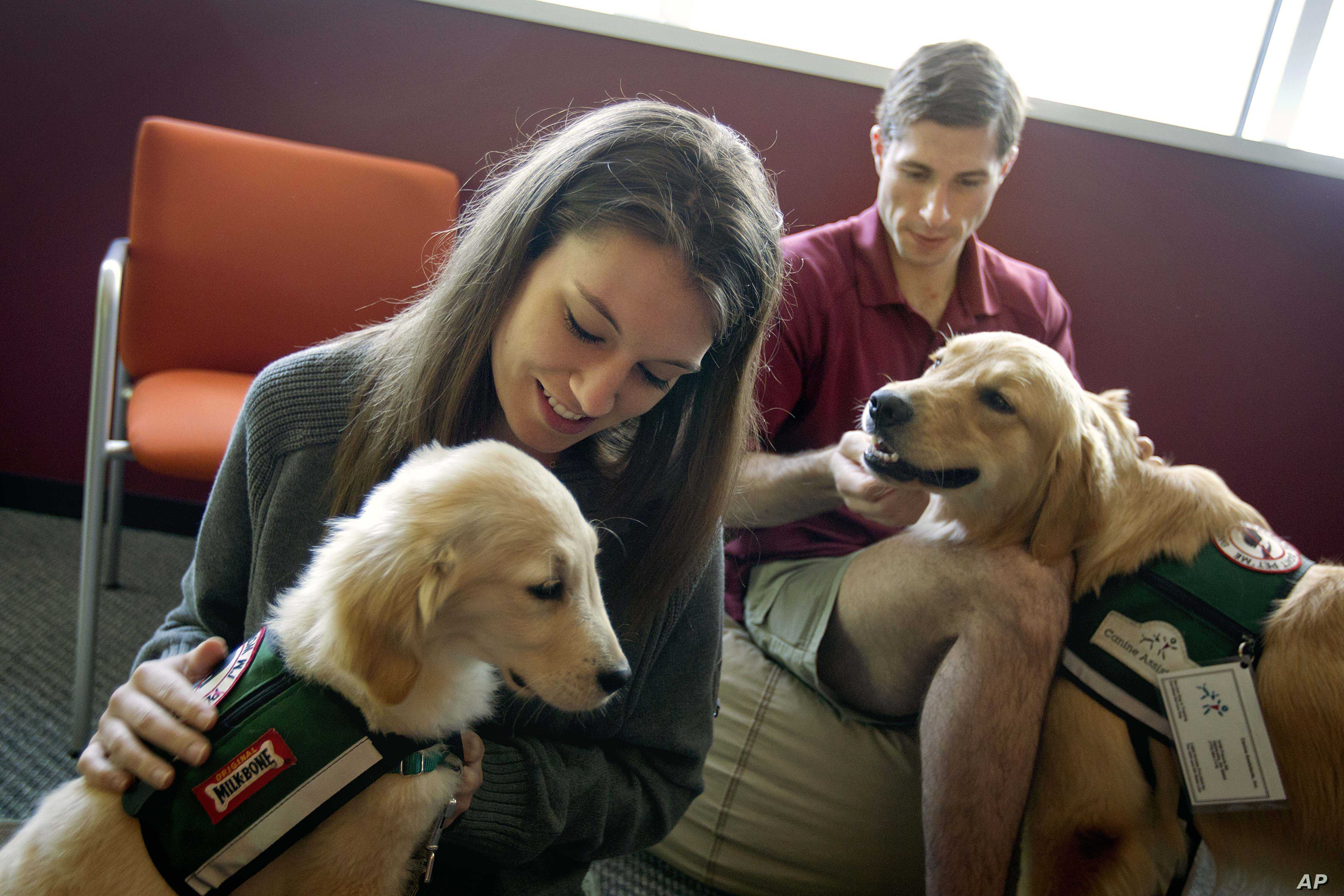 Law students Josh Richey, right, and Lindsay Stewart play with Hooch, a 19-month-old golden retriever and Stanley, a 4-month-old golden retriever, in between final exams at Emory University in Atlanta.