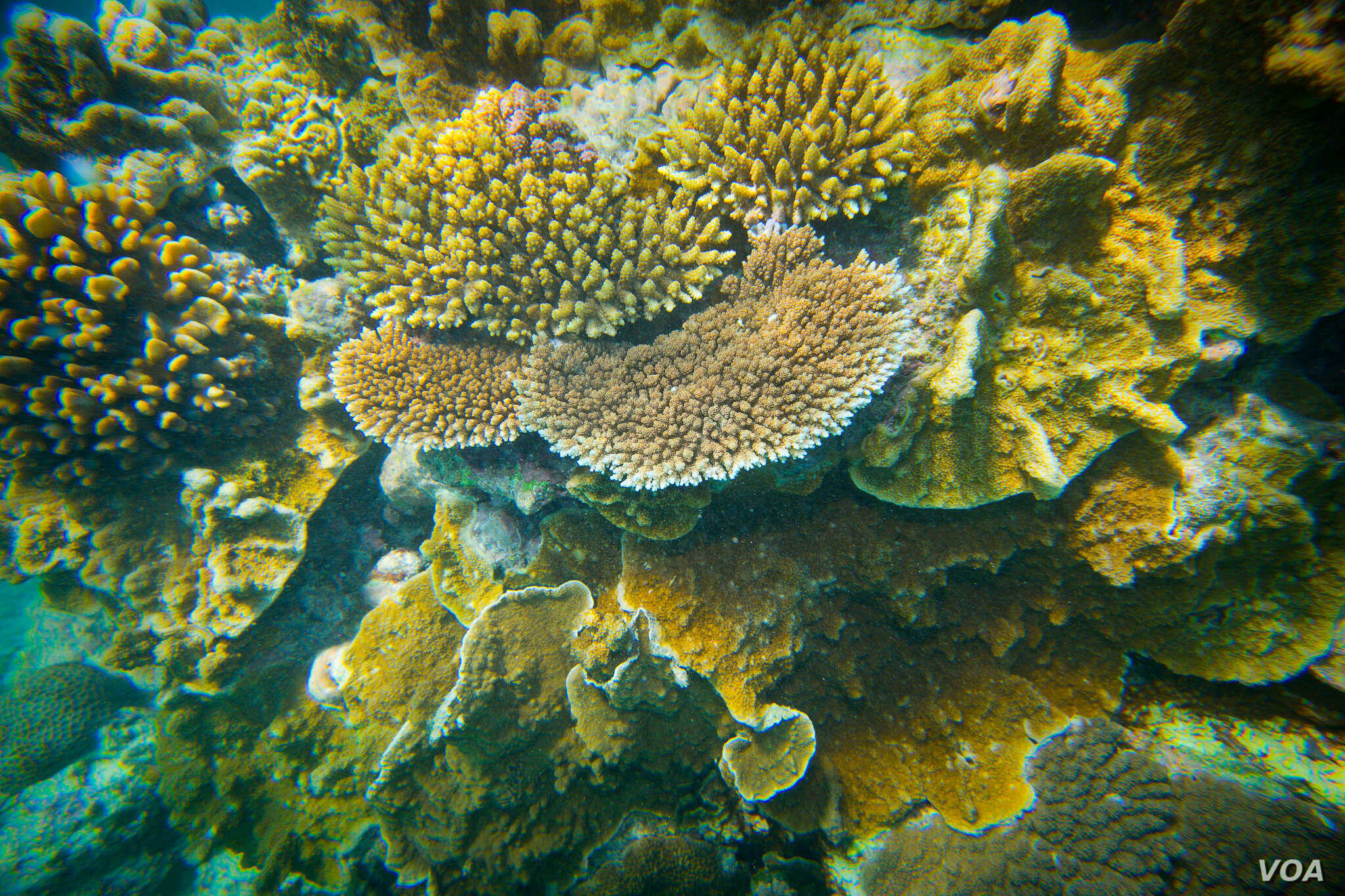 Onshore coral, Lady Elliot Island, Great Barrier Reef, Queensland, Australia, March 20, 2015, (Courtesy Image, DFAT / Patrick Hamilton).