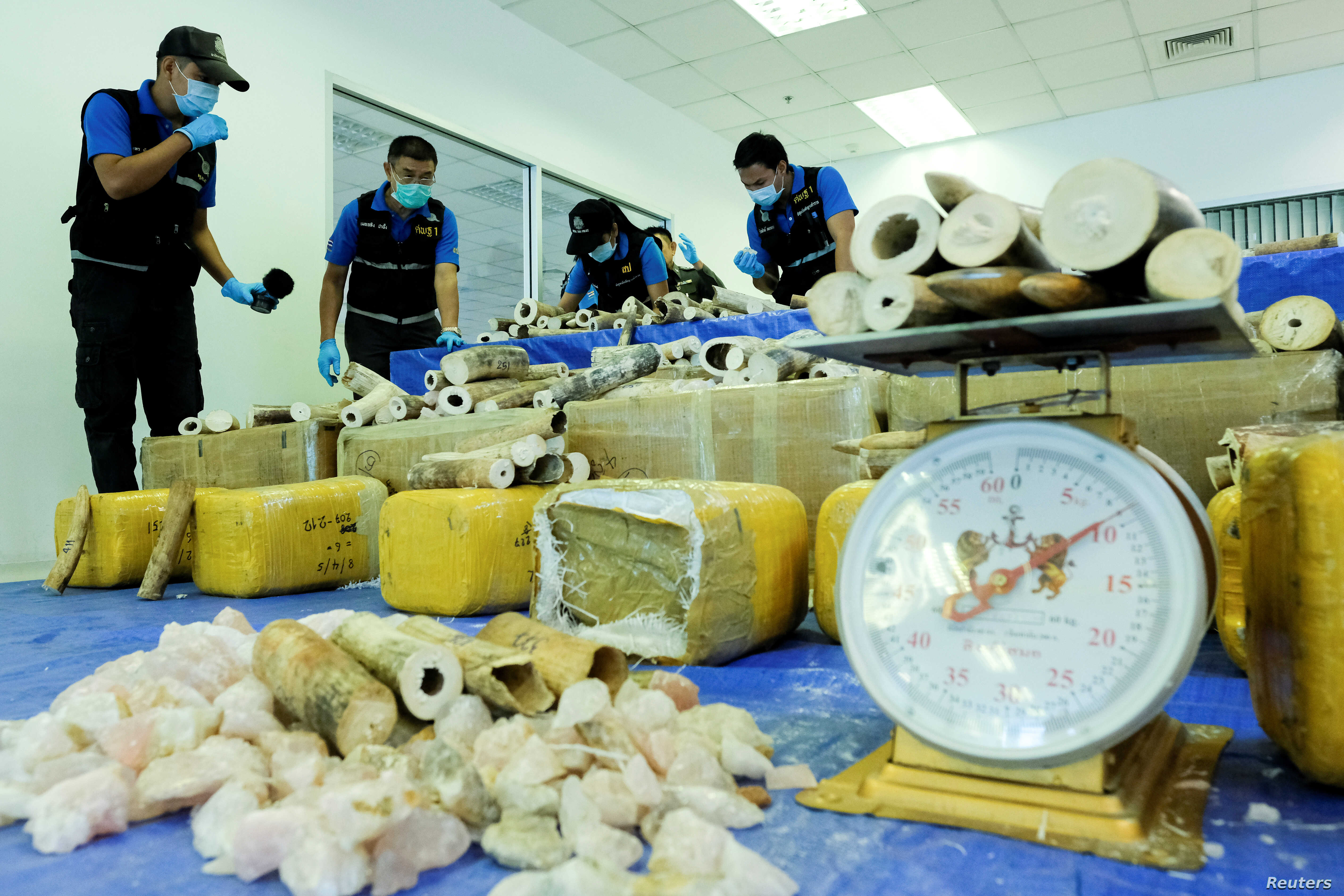FILE - Thai forensic experts collect DNA samples from a confiscated elephant tusk, coming from Malawi, at Suvarnabhumi International Airport in Bangkok, Thailand, March 7, 2017.
