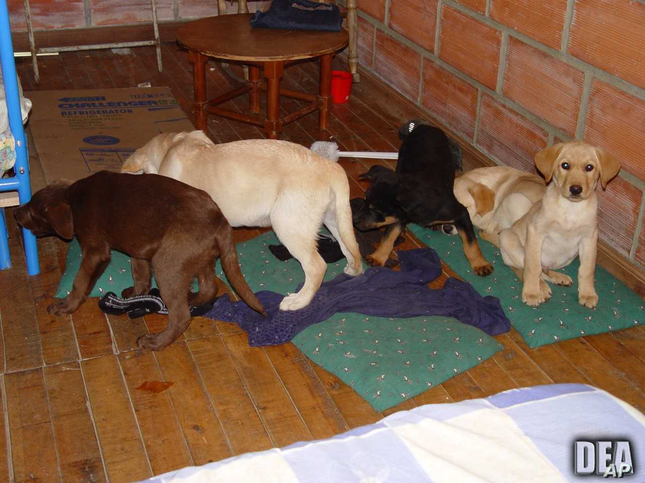 Colombia Vet Who Smuggled Heroin to US in Puppies Sent to