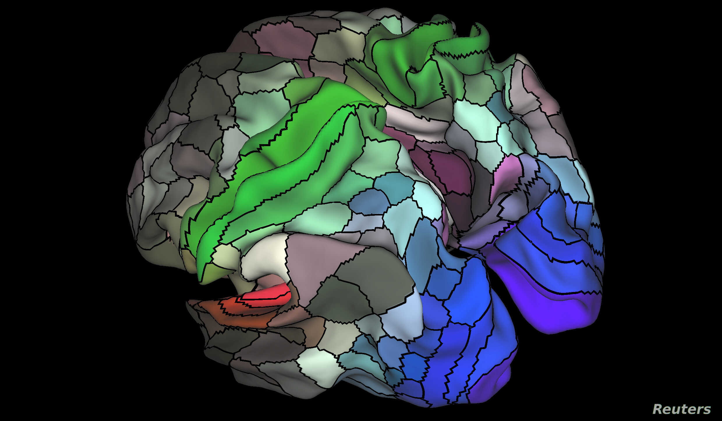 A 180-area multimodal human cortical parcellation on the left and right hemisphere surfaces of the human brain is pictured in this undated handout image.