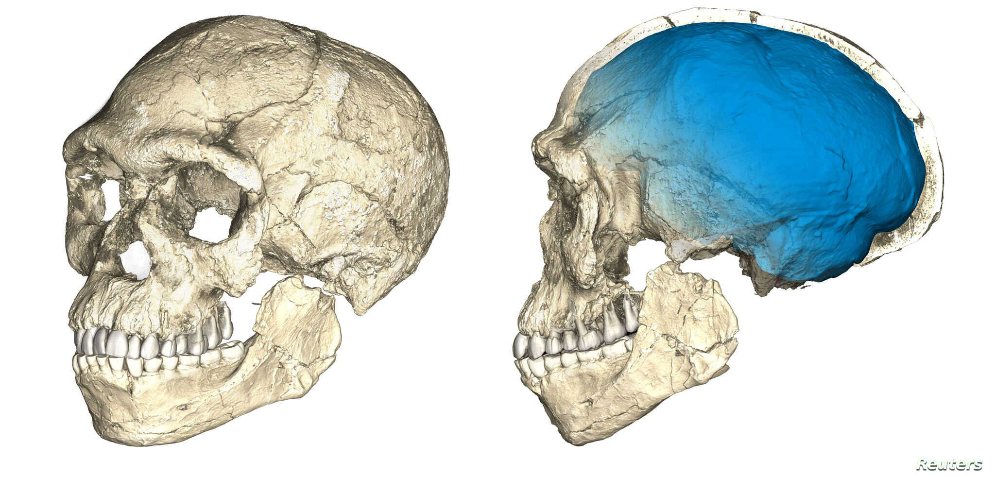 Two views of a composite reconstruction of the earliest known Homo sapiens fossils from Jebel Irhoud in Morocco, based on micro computed tomographic scans of multiple original fossils, are shown in this undated handout photo obtained by Reuters, June...