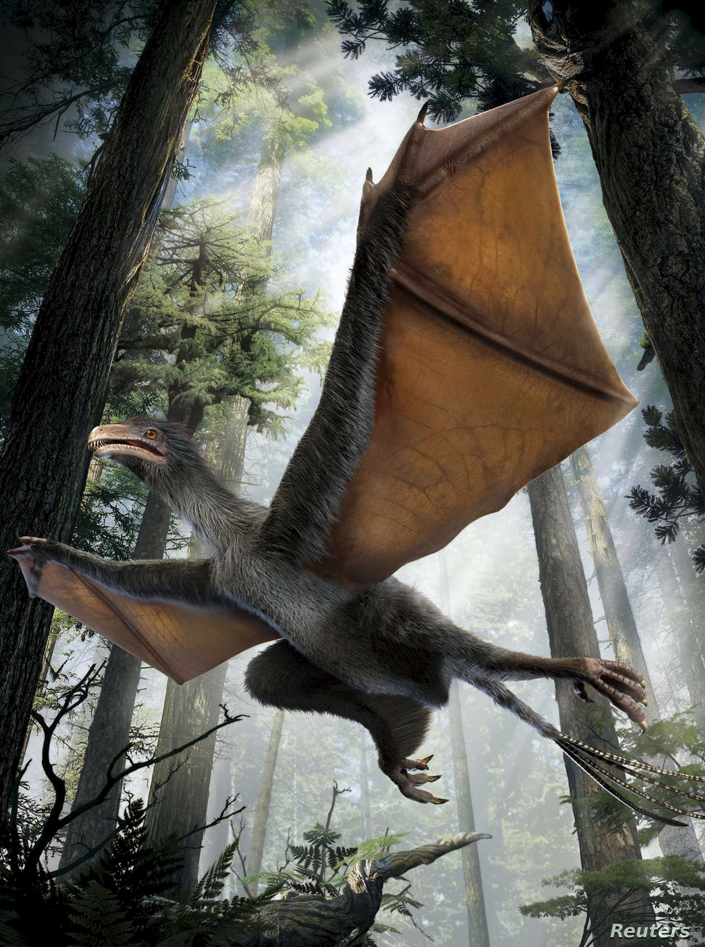 An artist's depiction of the Yi qi dinosaur is seen in this undated handout illustration provided by Dinostar Co. Ltd, April 29, 2015.