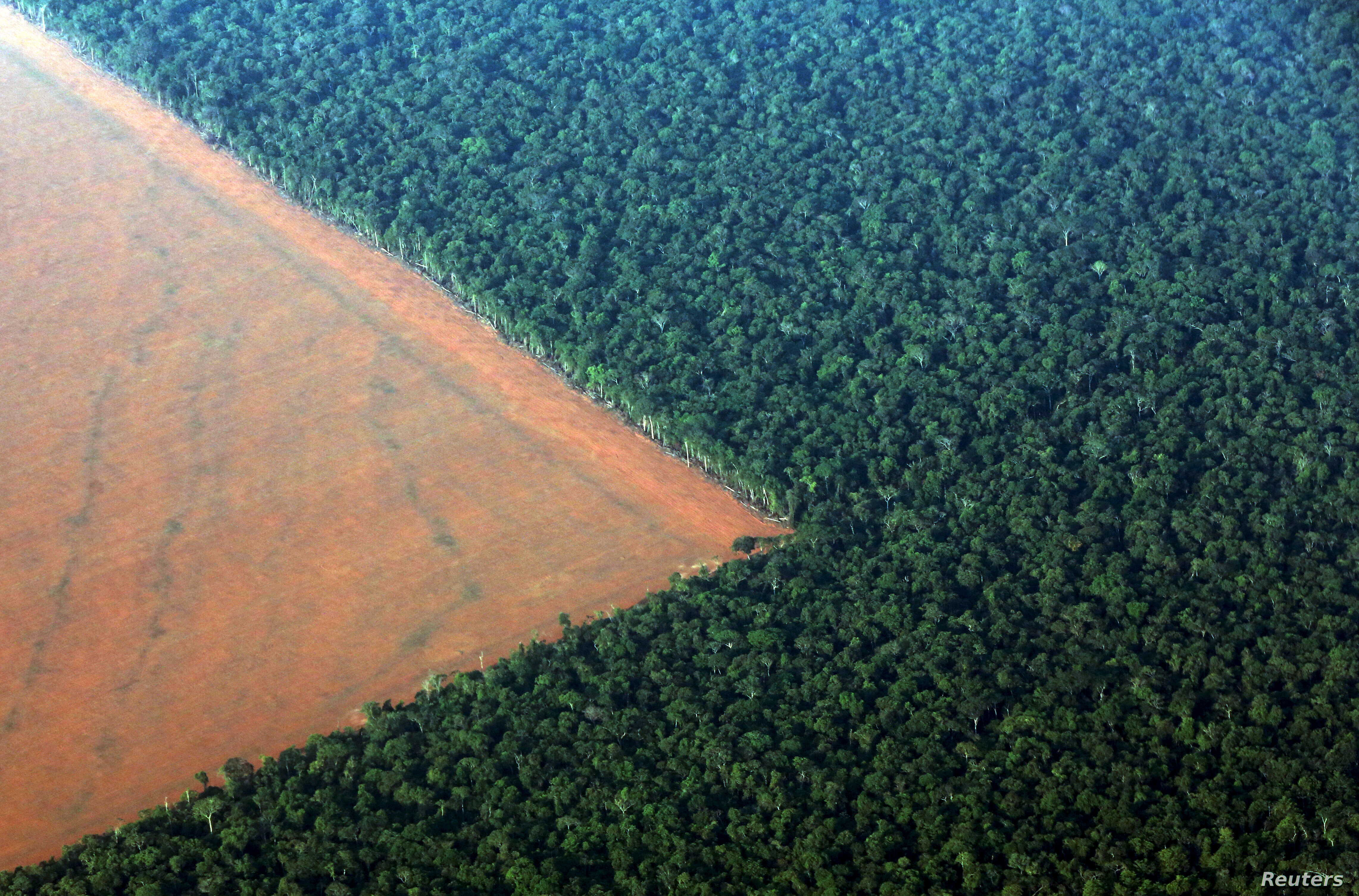 Destruction Of Brazil S Amazon Forest Jumps 16 Percent In 2015