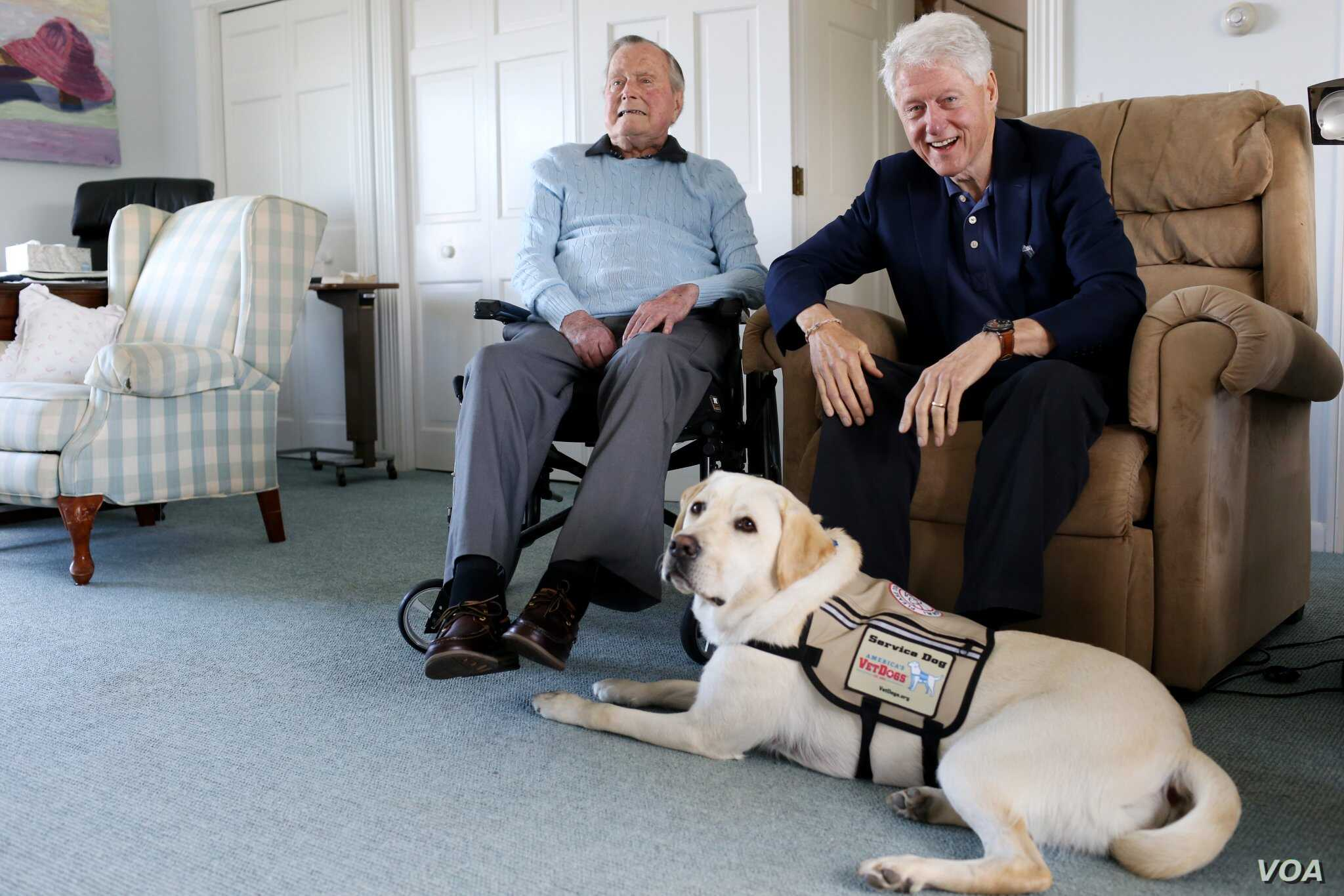 Former Republican President George H.W. Bush, left, and former President Bill Clinton, visiting Bush, pose for a photo with Sully, a yellow Labrador retriever who'll be Bush's first service dog at his home in Kennebunkport, Maine, June 25, 2018.