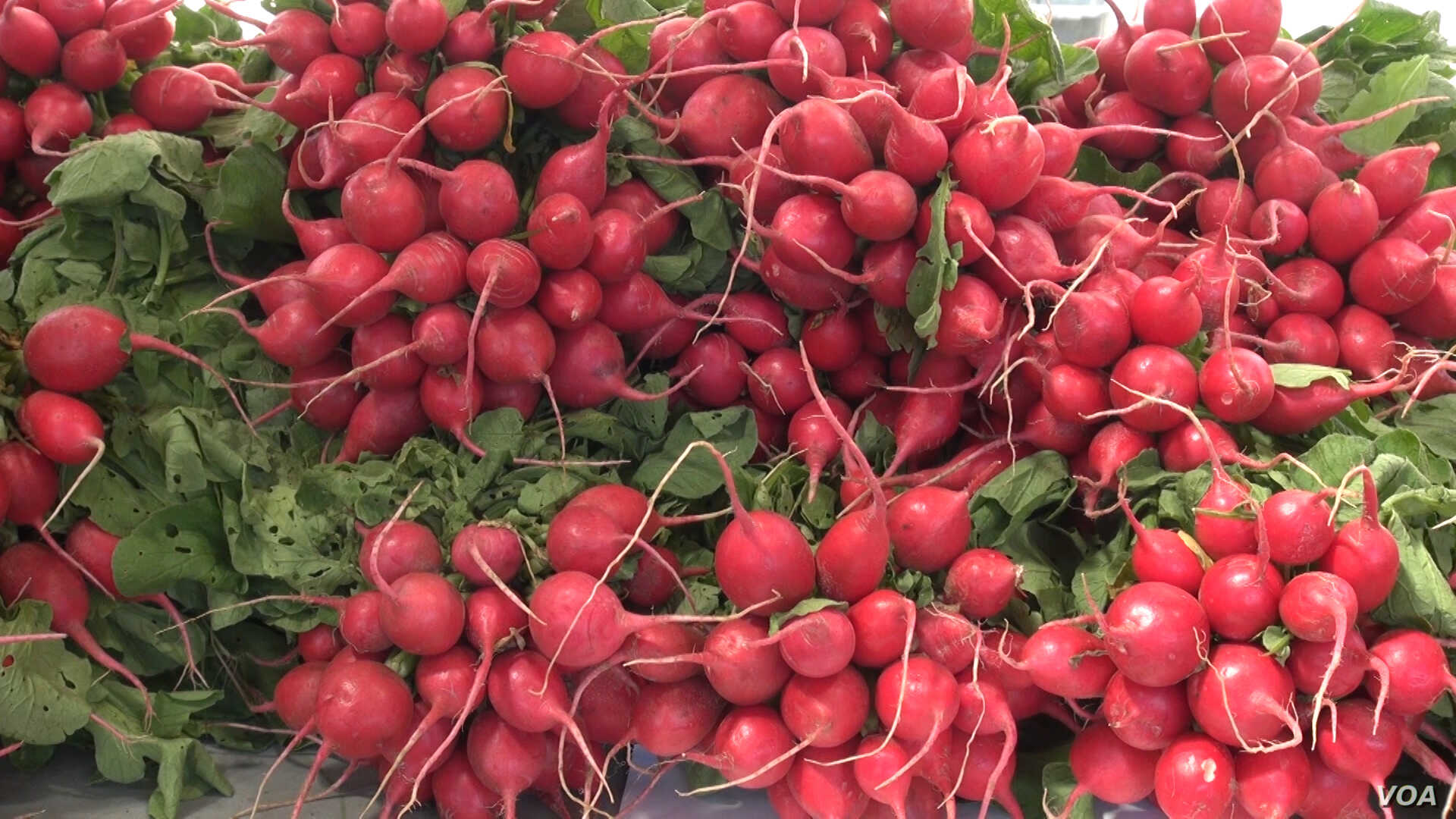 This display of fresh radishes was an attention-getting splash of color as shoppers stroll through the market. (J. Soh/VOA)
