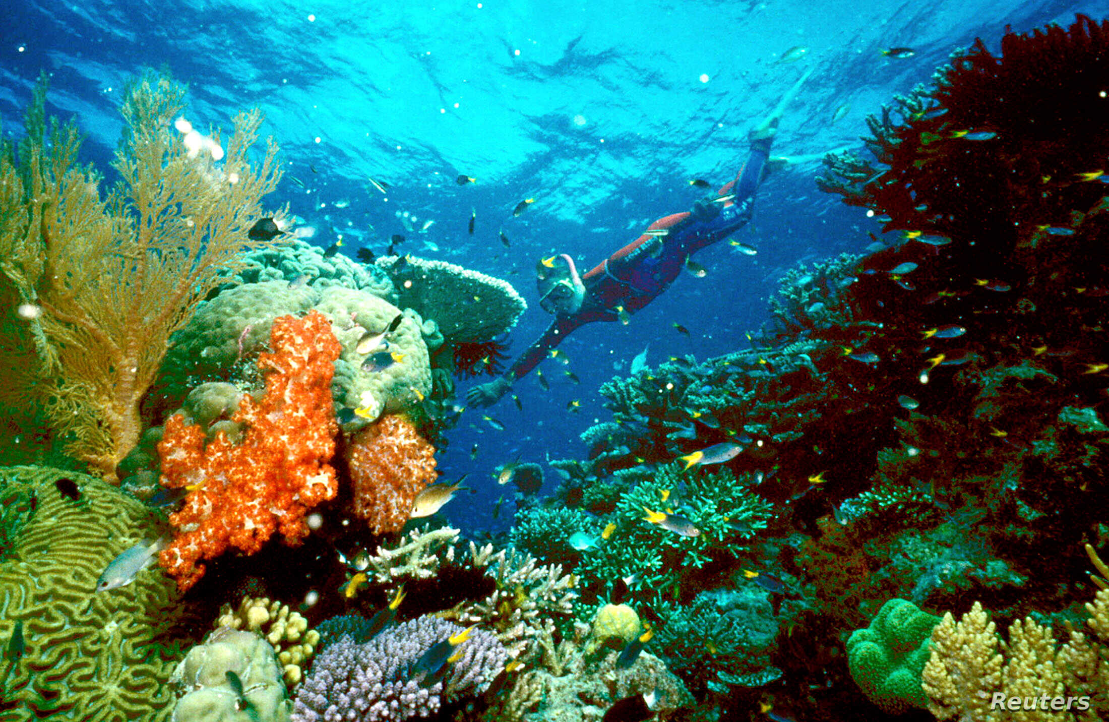Study A Third Of Parts Of Great Barrier Reef Dead Or Dying