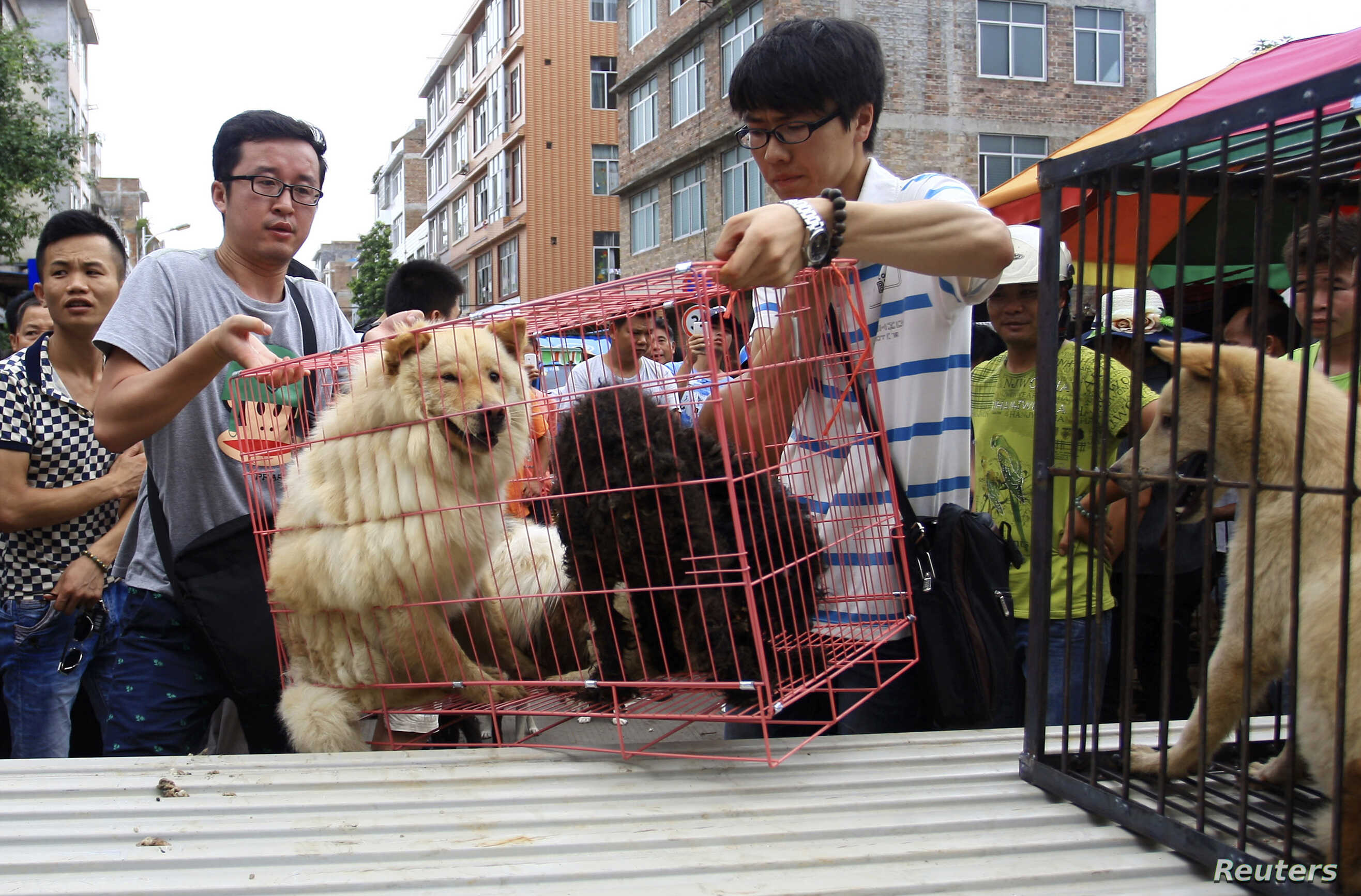 Rights Groups Criticize Use Of Dog Skin