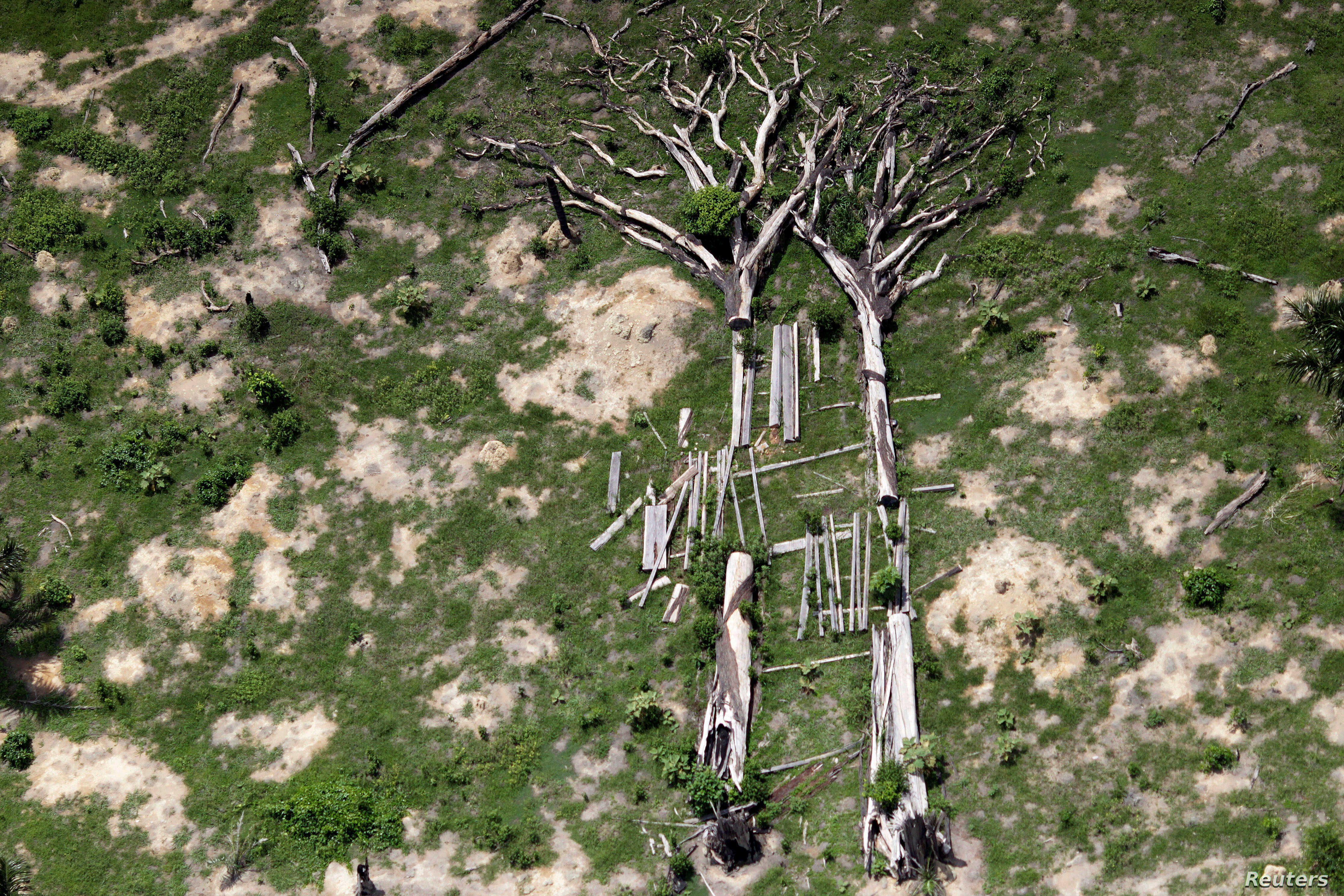 Fallen trees are seen during an operation to combat illegal mining and logging conducted by agents of the Brazilian Institute for the Environment and Renewable Natural Resources, supported by military police, in the municipality of Novo Progresso, Pa...