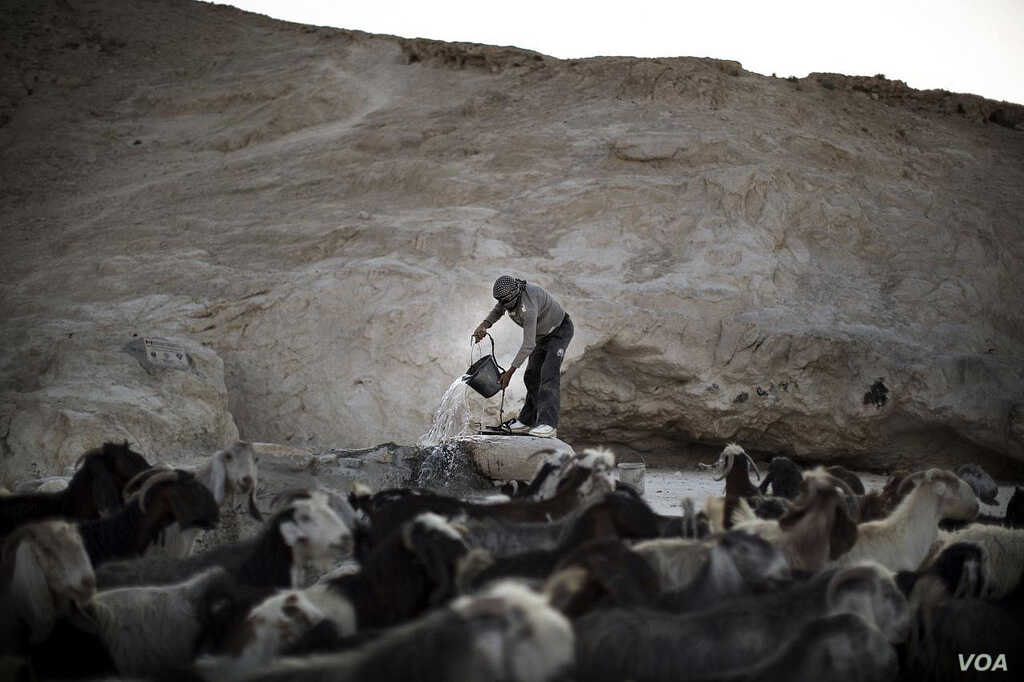 A Palestinian farmer harvests water from a well for his goats and sheep in a region suffering from water scarcity, which will get worse as planet temperatures rise.