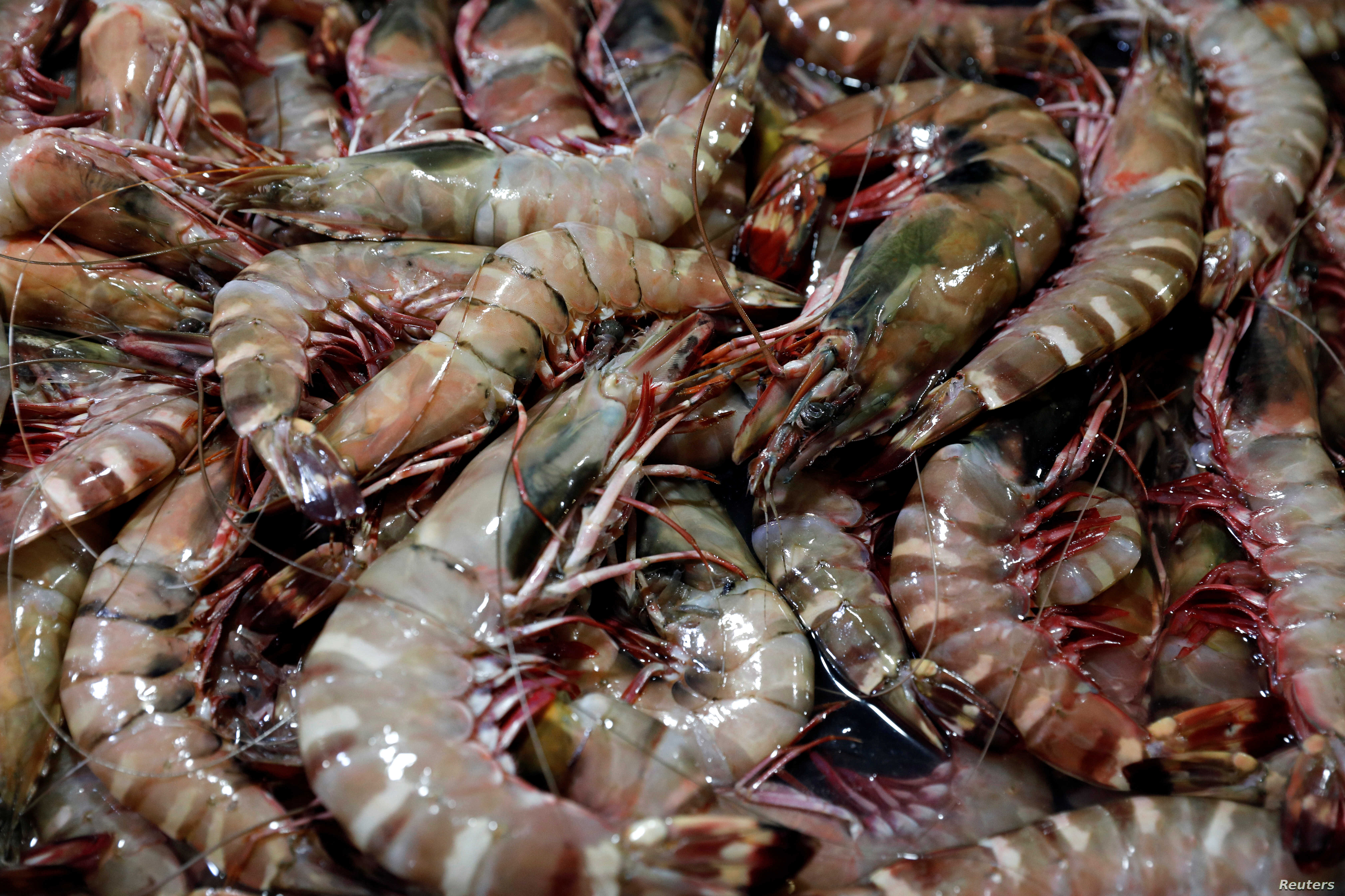 Shrimps are seen displayed for sale at the Filipino Market in Kota Kinabalu, Sabah, Malaysia, July 4, 2018.