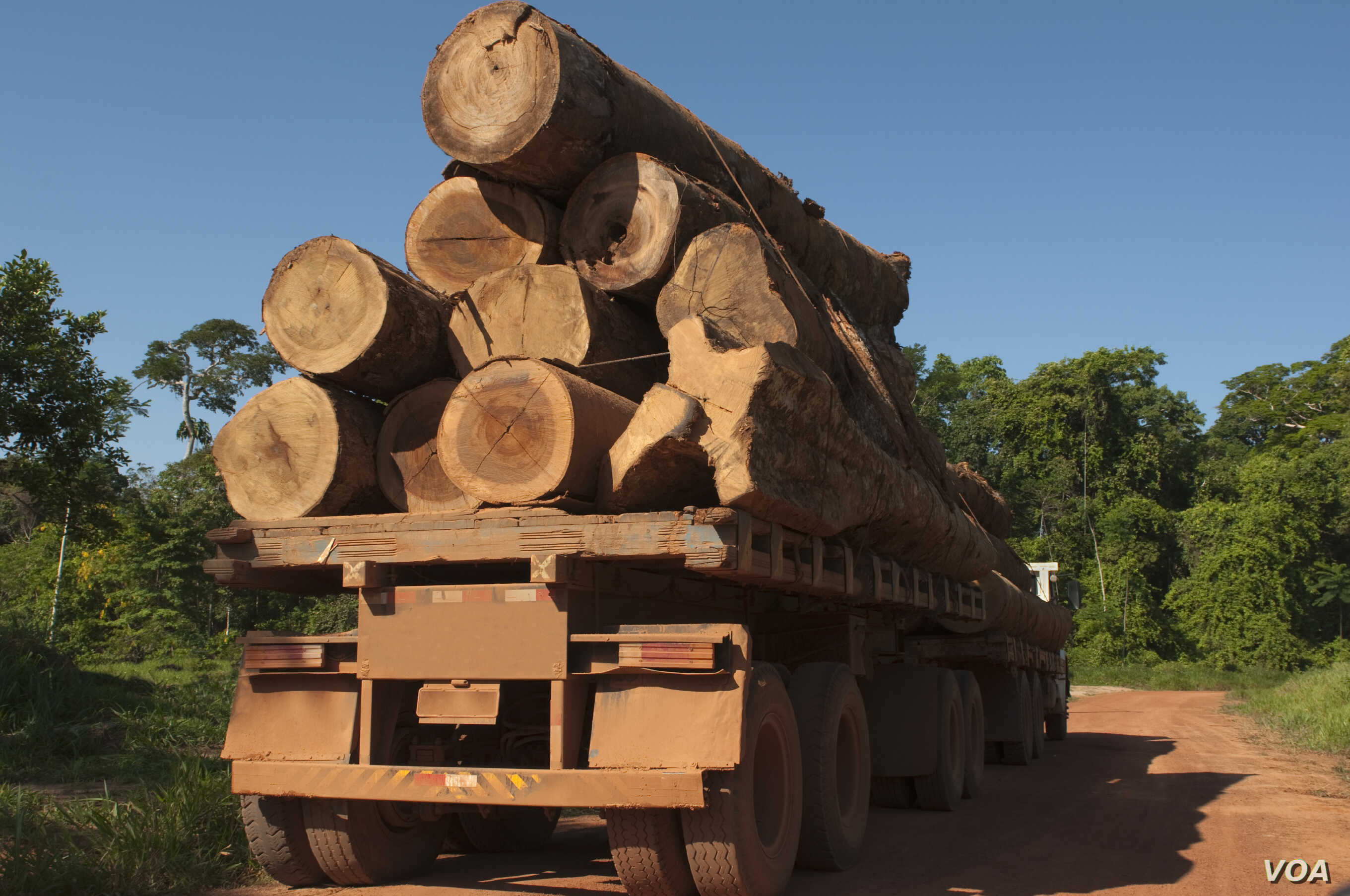 The UN says between 30 and 100 billion dollars are lost each year to the illegal trade in timber. (UNEP)