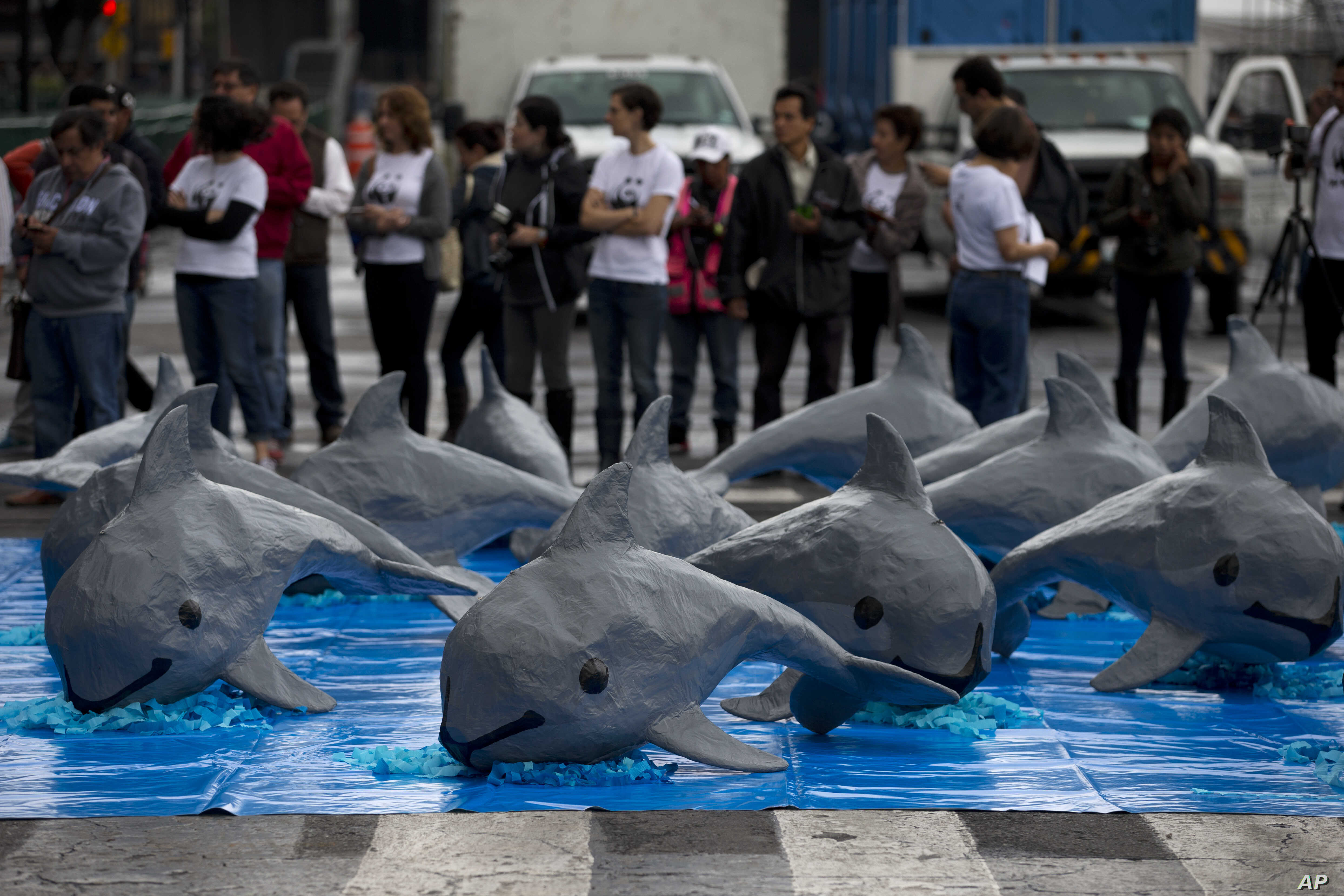 FILE - Papier mache replicas of the critically endangered porpoise known as the vaquita marina are displayed during an event in front of the National Palace calling on the Mexican government to take additional steps to protect the world's smallest ma...
