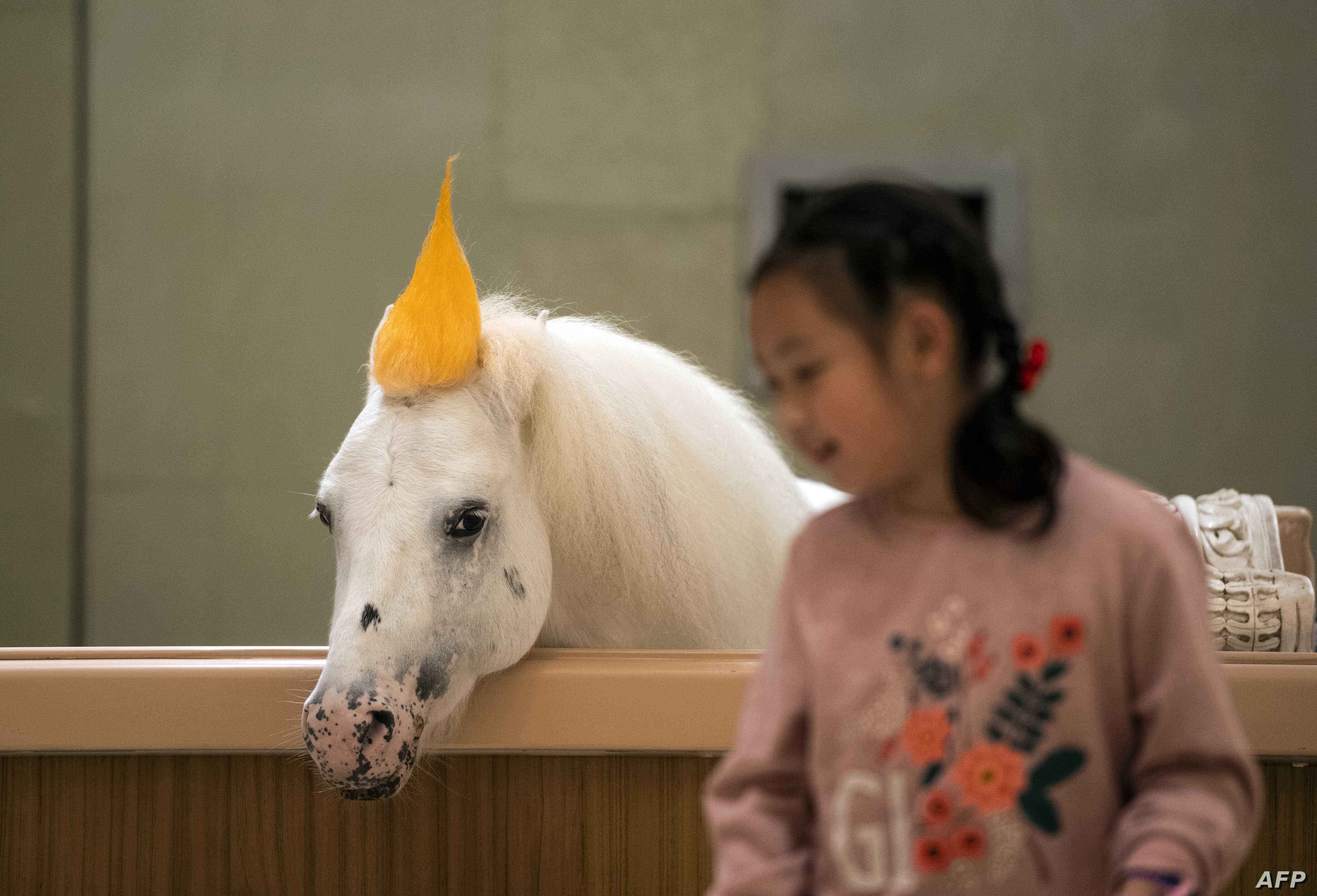 FILE - A girl is silhuetted againt the backrop of a horse in a stable at the Horse Culture Museum, part of an equestrian-themed town in Jiangyin, Jiangsu province, some 200 kilometers northwest of Shanghai, China, Oct. 20, 2018.