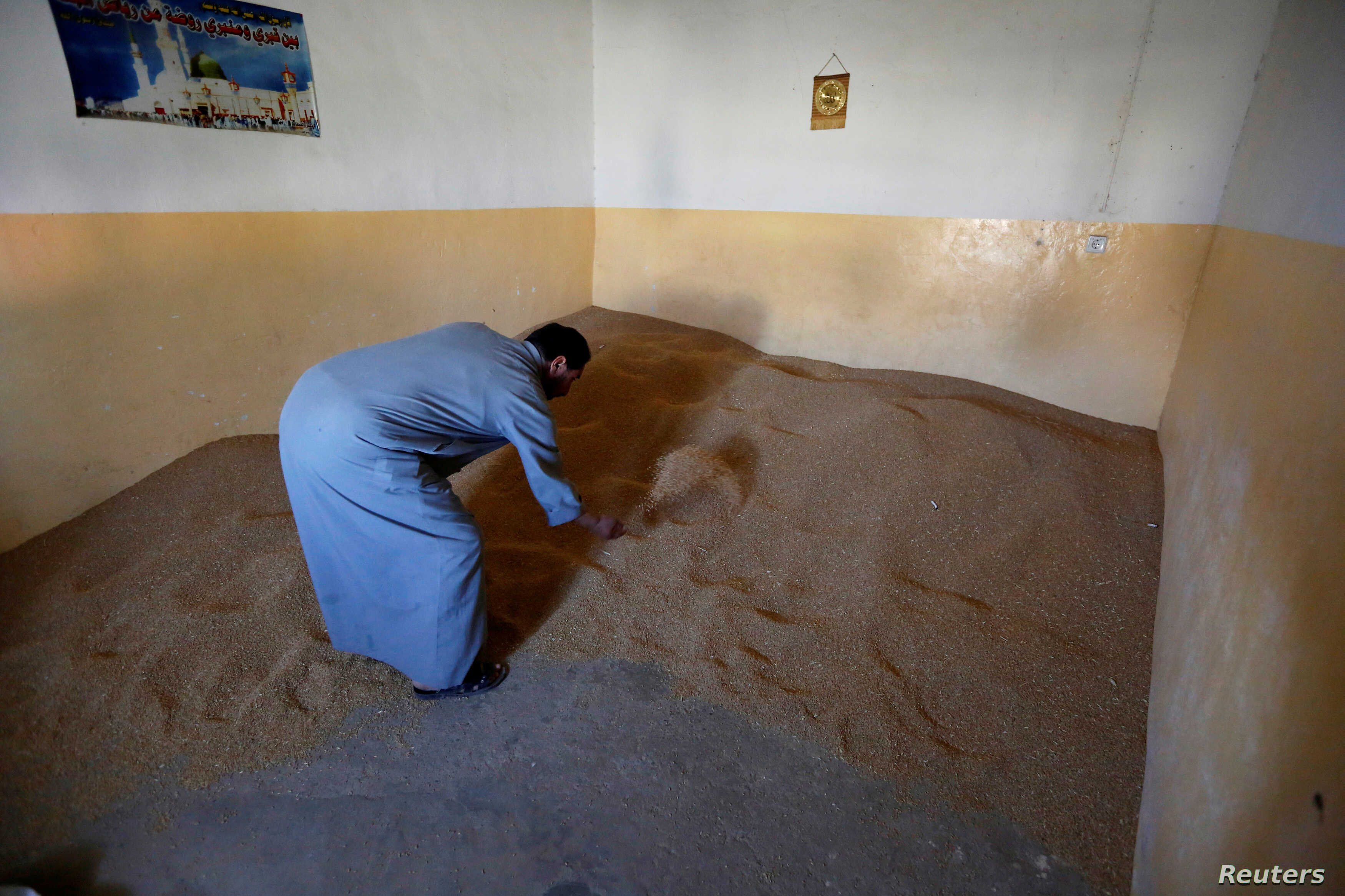 A farmer inspects his wheat stocks in the town of Basheeqa, Iraq, Feb. 8, 2017.
