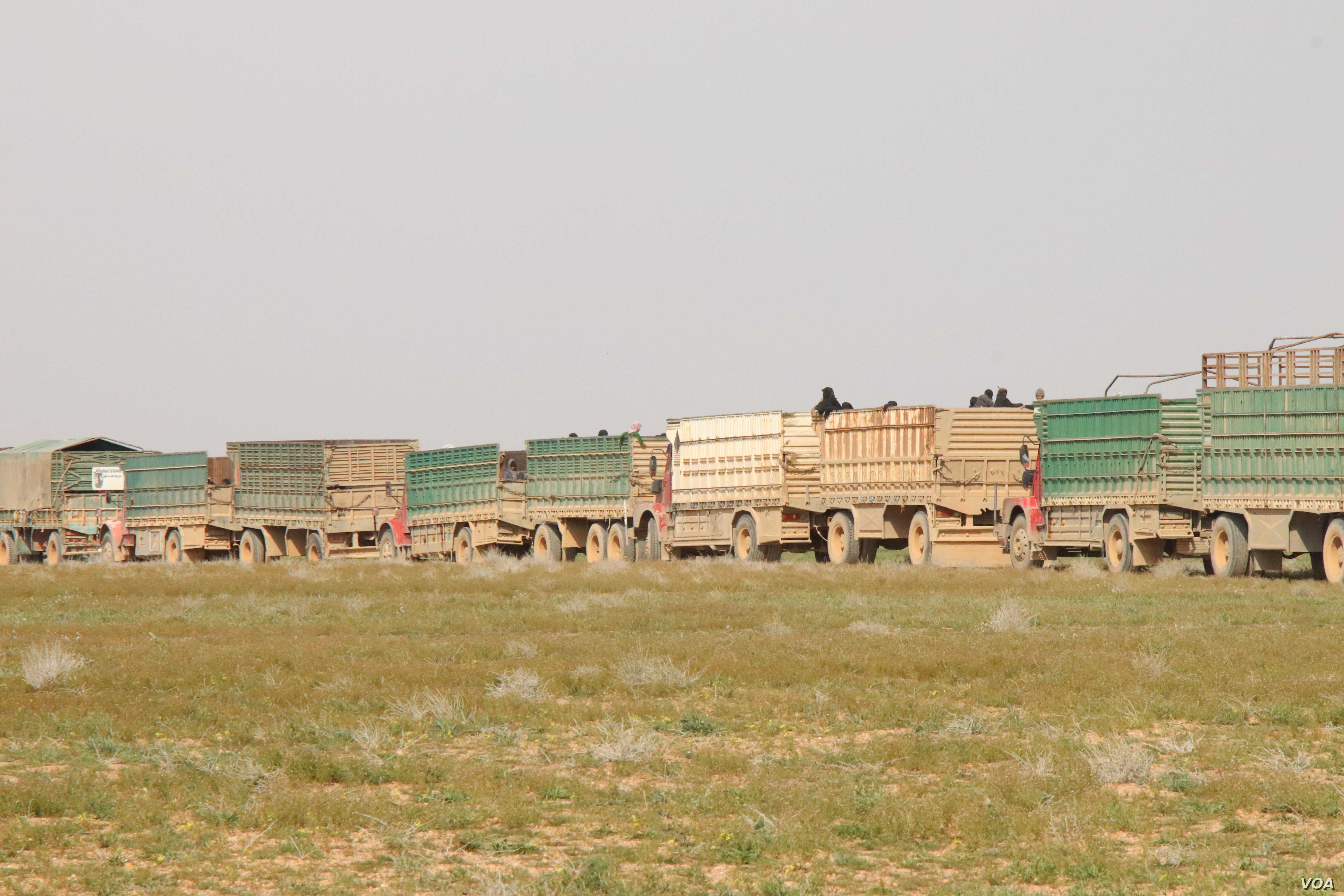 Trucks carry people, sometimes as many as 1,000, daily from the fighting in Baghuz to safer areas as the battles drag on, near Baghuz in Deir el-Zour, Syria, Feb. 26, 2019. (H.Murdock/VOA)