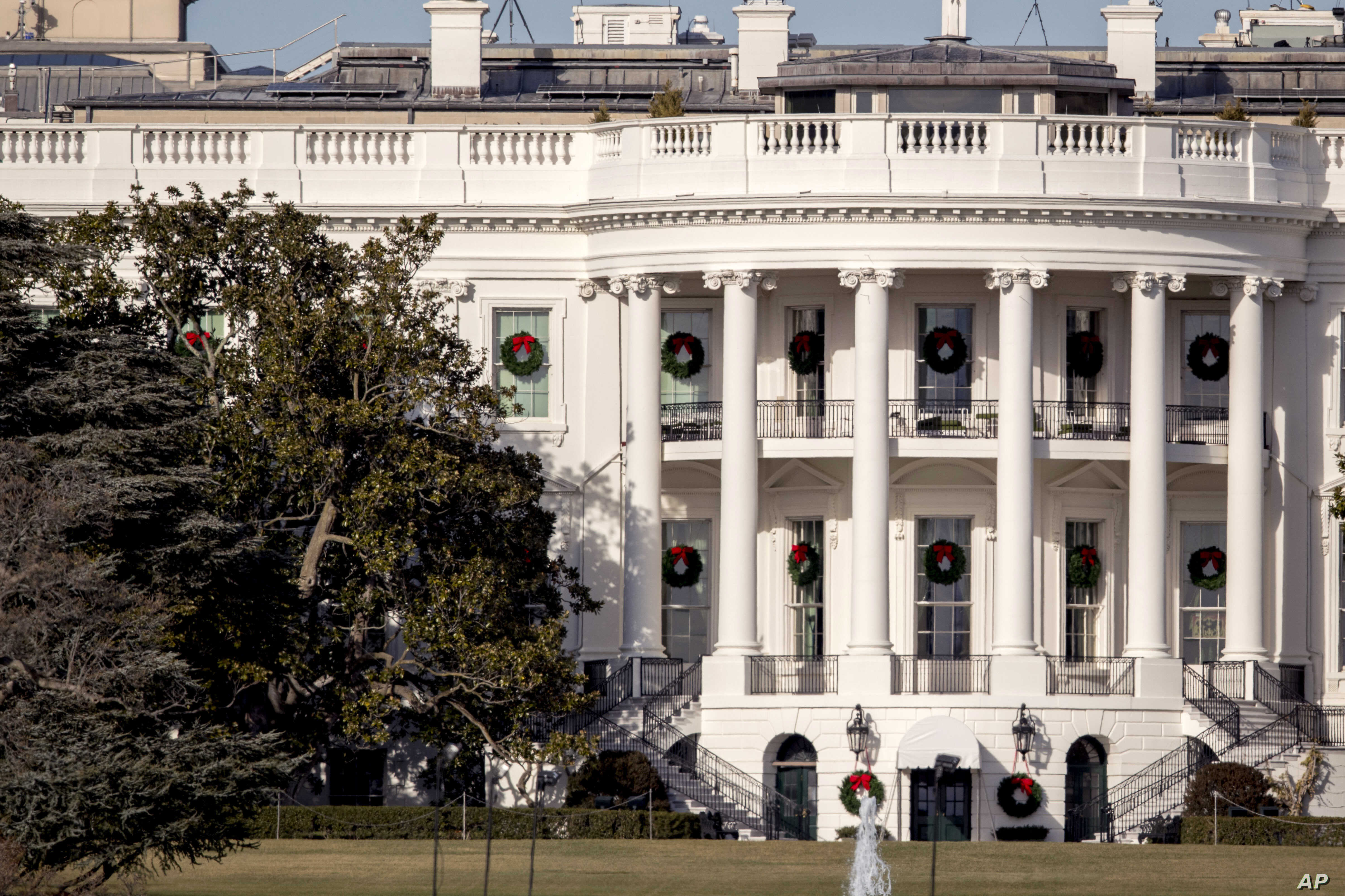 Oldest Tree On White House Grounds To Be Cut Down Voice Of America